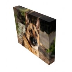 Pet Memorial Canvas