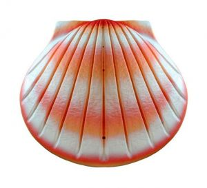 Coral Shell Urn